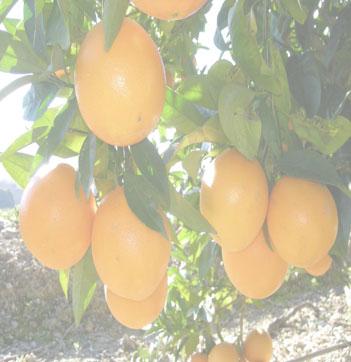 ensalada-tibia-naranja-bacalao-L-eCuzS0