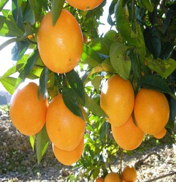 ensalada-tibia-naranja-bacalao-L-eCuzS1
