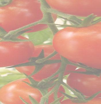 tomates0