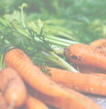 zanahoria0
