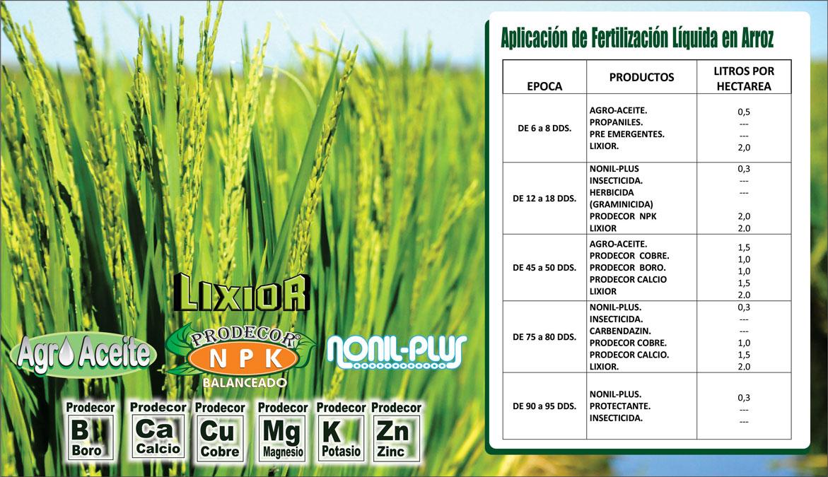 Plan-de-Fertilizacion-de-Arroz