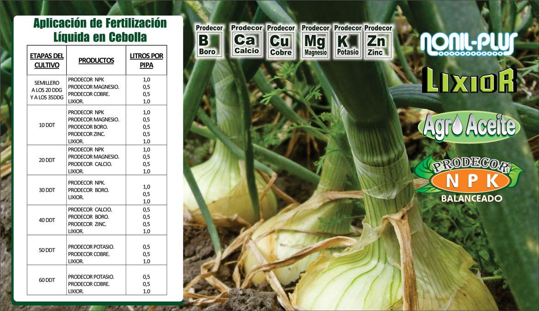 Plan-de-Fertilizacion-de-Cebolla