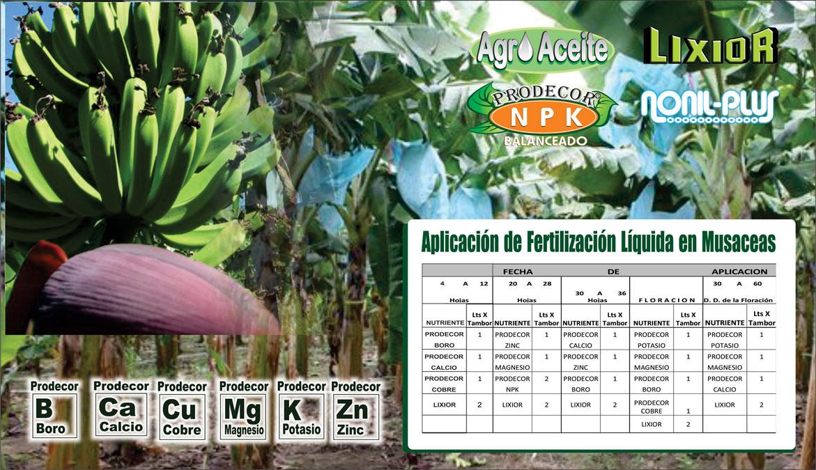Plan-de-Fertilizacion-de-Musaceas